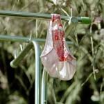 外干しパンツマニア撮影による民家の洗濯物盗撮画像